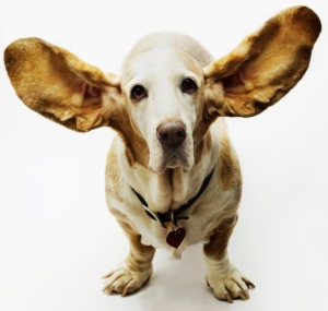 listening-doggy-ears