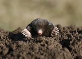 mole on a hill